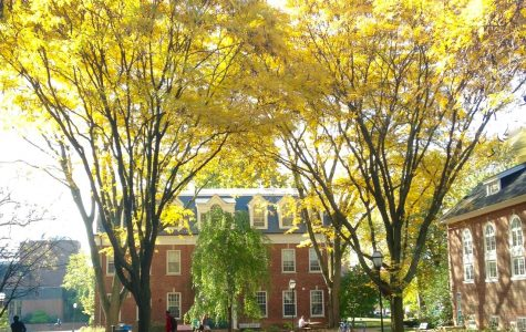 """""""These honey locusts were planted around the old quad about sixty years ago to add color and give the space a more intimate feel,"""" says Randy Haffling. Tree I.D. #84-87"""