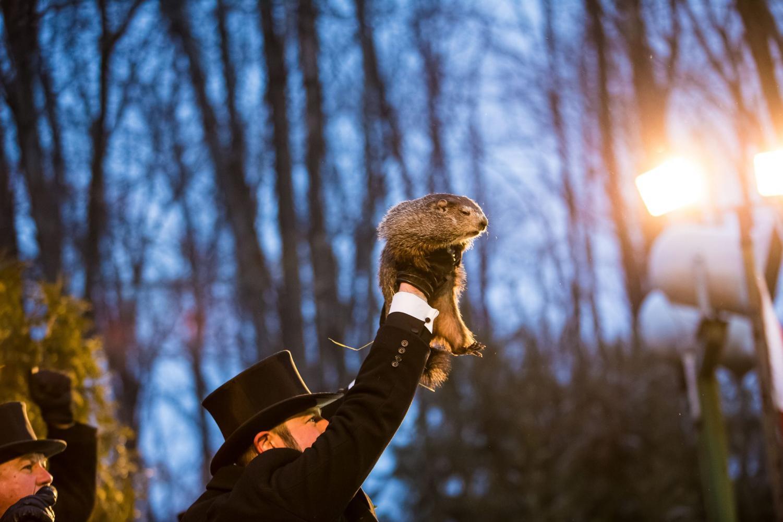 Punxsutawney Phil on Groundhog Day 2018. Photo via Wikimedia Commons under Creative Commons License.