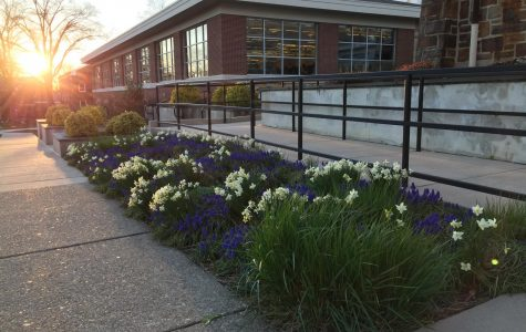 The spring flowers still continue to bloom.